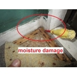 Showing moisture damage under carpet and to wall